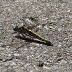 ゴキブリの冬眠と壊滅について考える
