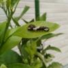 住宅寿命と白アリ