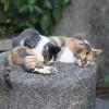 ペット供養は課税対象