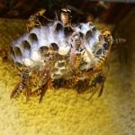 自分で白アリ駆除する方法