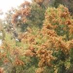 花粉症対策の種類