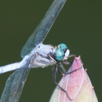 集合住宅のゴキブリ駆除