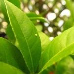 蚊取り線香の効果について考える