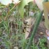 ゴキブリ対策とディスポーザーの件