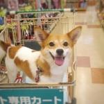 犬猫の歯磨き