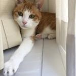 ペットの返品とクーリングオフ制度