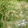 花粉症対策と鼻毛の効果