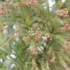 花粉症と耐性